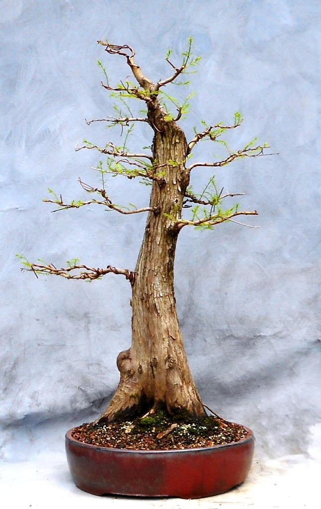 Cypress7-30-16-1