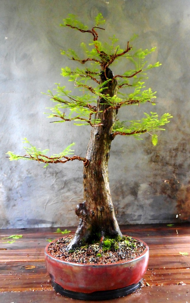 Cypress8-13-16-1
