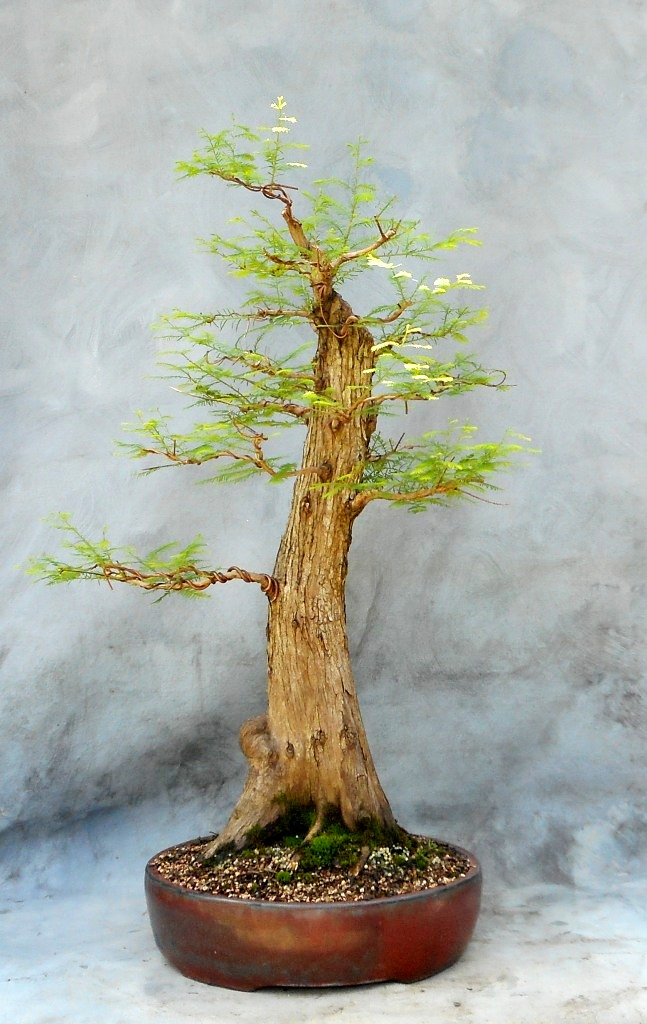Cypress8-20-16-1
