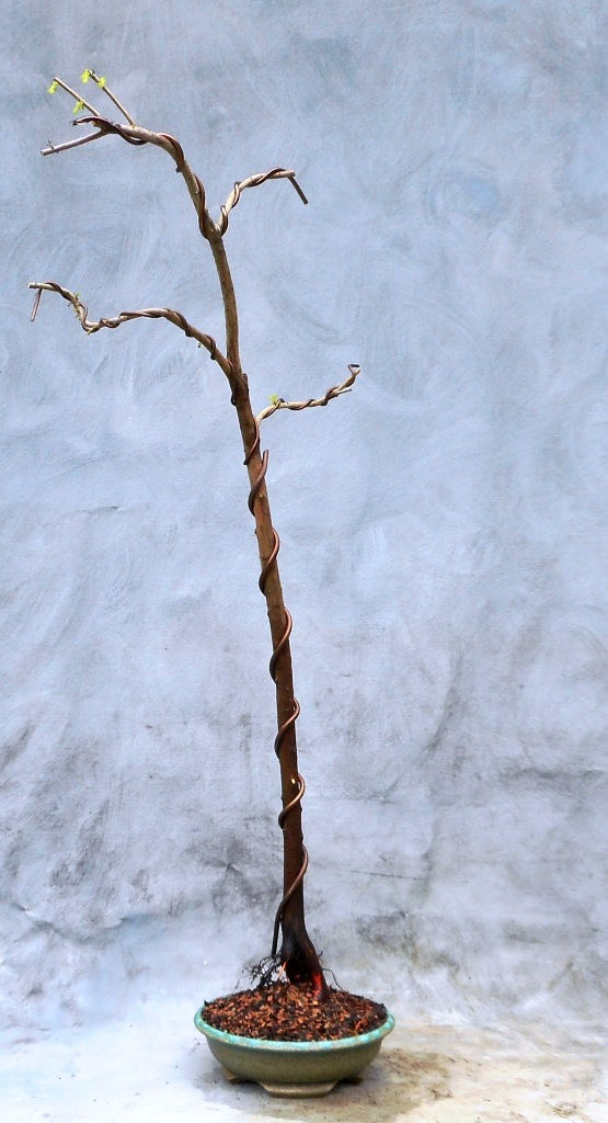 cypress9-17-16-5