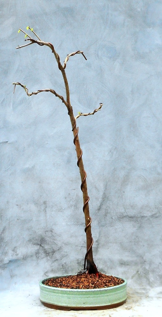 cypress9-17-16-6