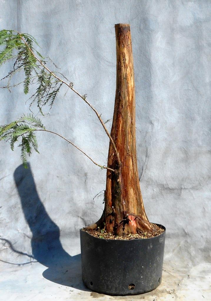 cypress9-30-16-3
