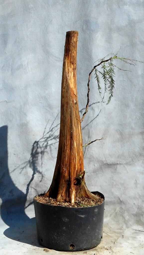 cypress9-30-16-5