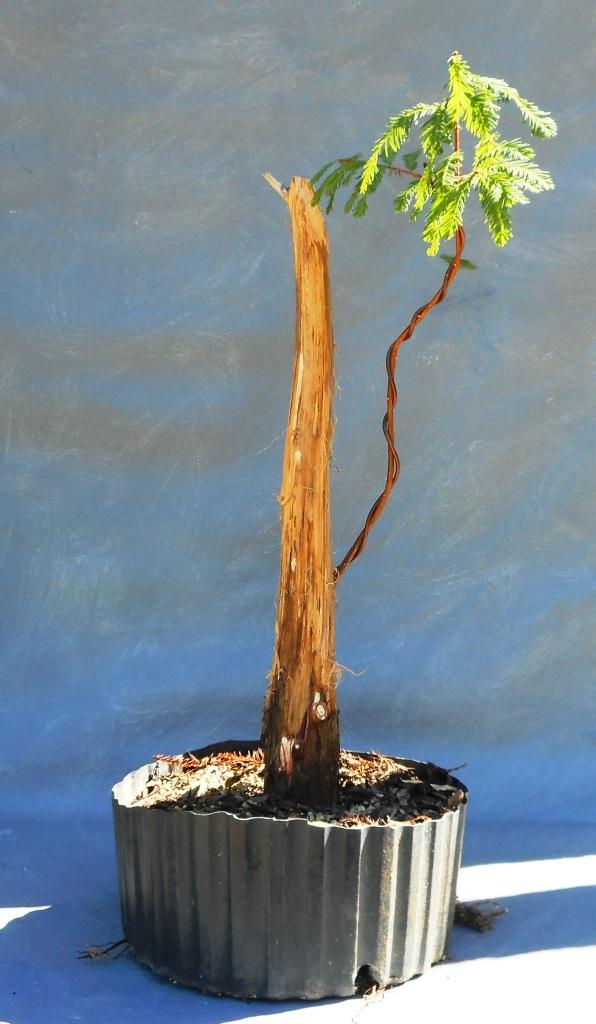 cypress10-22-16-2