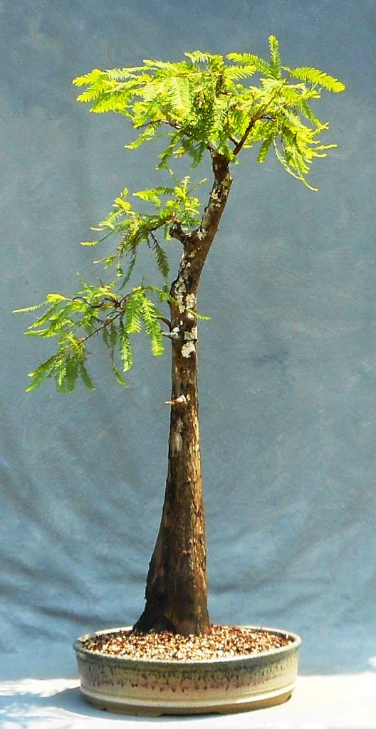 Cypress9-4-17-13