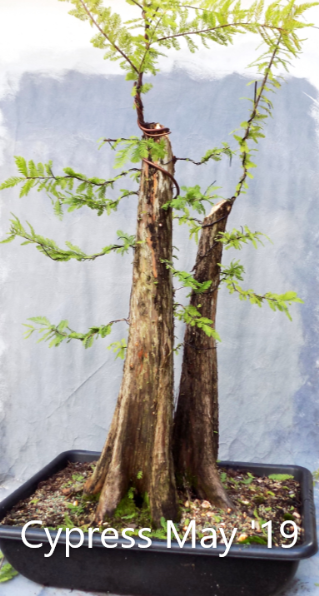 Cypress5-27-19-2