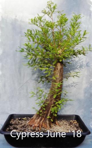 Cypress6-13-18-1