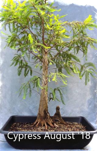 Cypress8-12-18-1