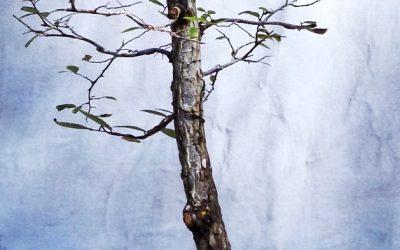 Sunday Fun – Cedar Elms And The Monster Crape