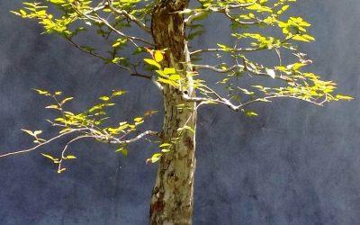 Portrait Time – Hawthorn, Oak, Elm